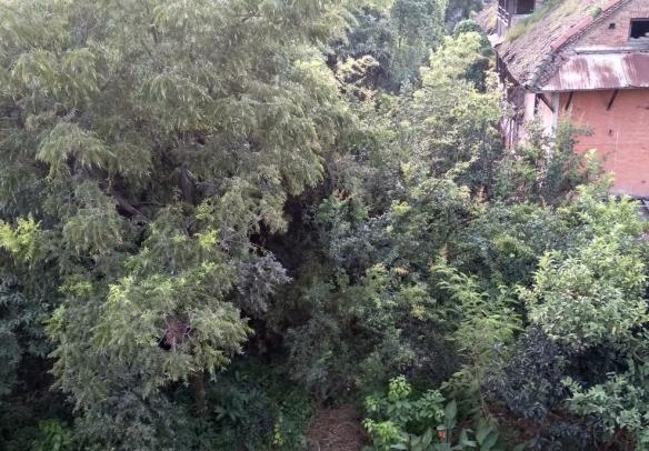 Green Dilibazar